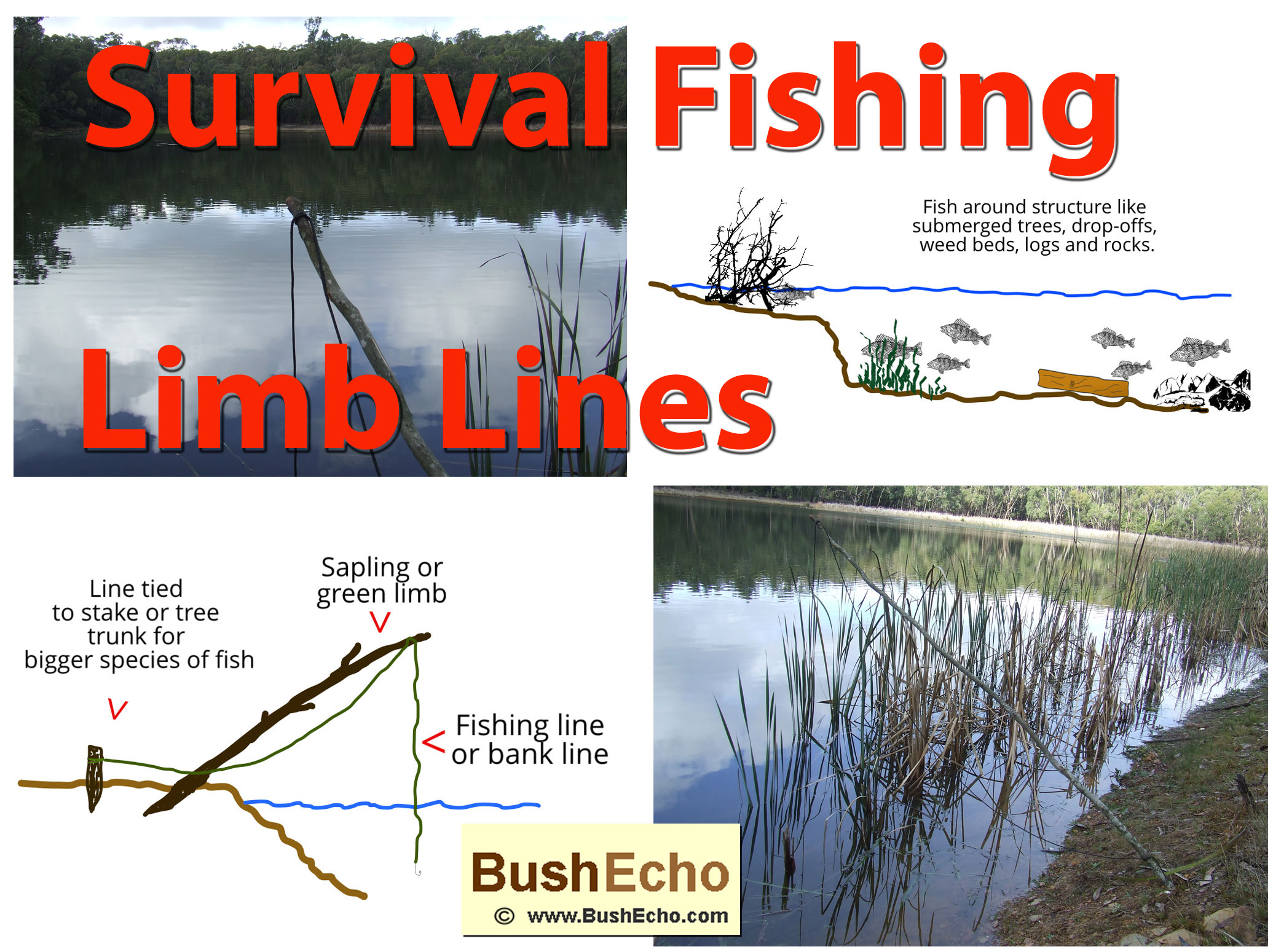 Survival Fishing Limb Lines