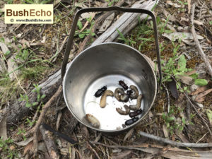 bushpot-uses-bushcraft