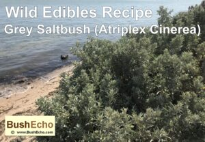 Wild Edibles Recipe Grey Saltbush